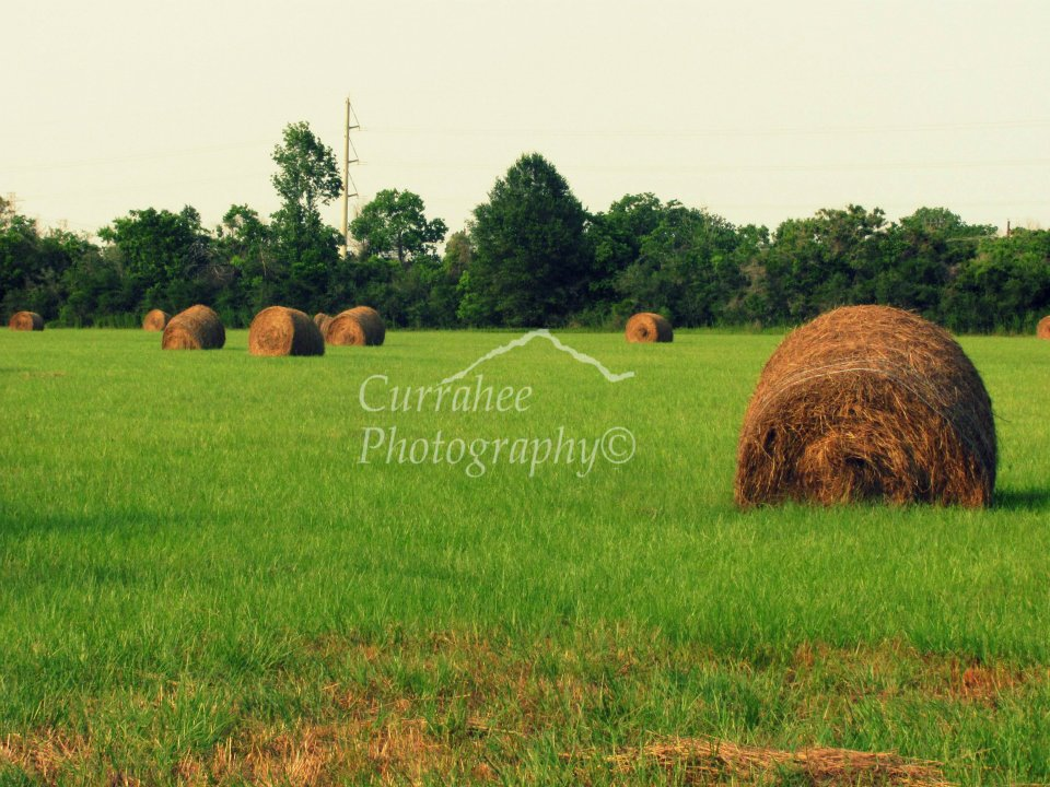 plentiful-harvest